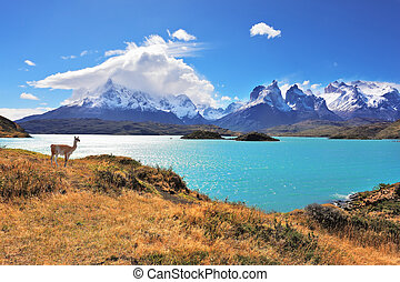 Graceful silhouette guanaco on the lake Pehoe - Epic beauty...