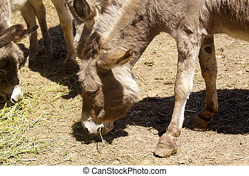 Donkey grazing in a field