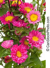 easter flower  - close up violet easter flower