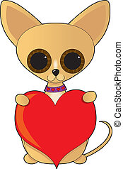 Chihuahua Valentine - A cute little chihuahua with oversized...