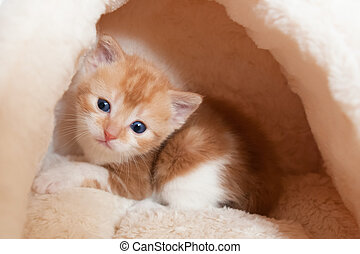 wide-eyed kitten - cute wide-eyed kitten in a coxy bed