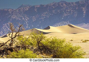 Death Valley Sand Dunes - Sand Dunes And Mountains At Death...