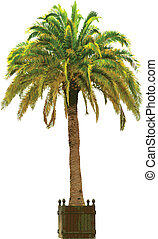 Vector illustration of the palm tree in pot