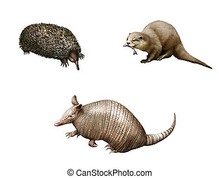 Australian animals: Armadillo, echidna and Otter. Isolated...