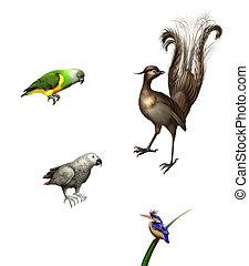 exótico, birds:, budgies, gris, loro, verde, loro,...