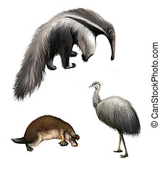 Giant anteater, Ostrich Emu and platypus, Isolated on white...