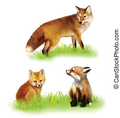 Walking fox, cab. baby foxes playing. Isolated on white background.