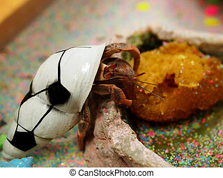 Hermit Crab Pet - A pet hermit crab in a shell painted a...
