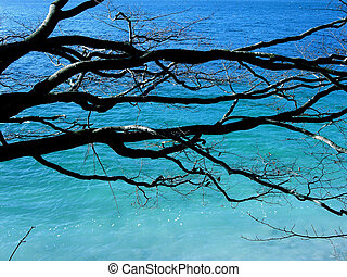 Tree branches over water