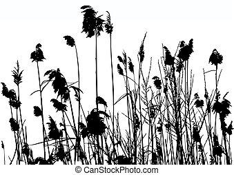 reeds - vector illustration of reeds