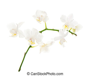 white orchid arrangement centerpiece isolated on white background
