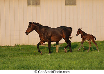 Mare and newborn foal