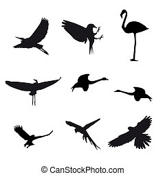 Set of different photographs of birds isolated on white background