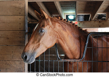 warmbood horse in stall