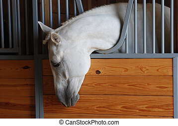 horse looking out of stall