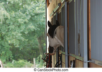 horse at stall window