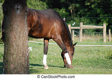 Horse grazing by tree