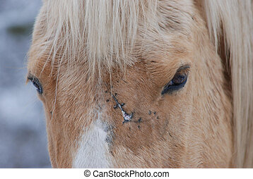 cicatriz, cara, caballo