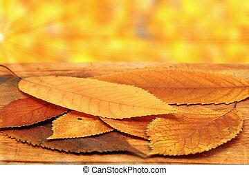 美しい, さくらんぼ, 葉, 設定, 秋