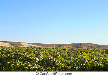 Wine country landscape before harvesting on sunny day blue...