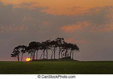 Sunset Trees, Nairn, Scotland