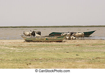 Lake Turkana - Traditional fisherman boat and cattle along...
