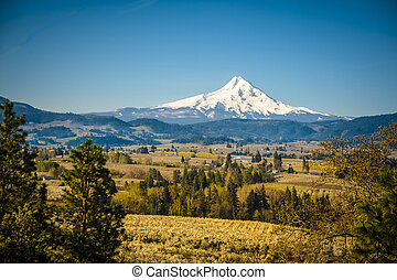 Mt Hood Vally and apple orchards