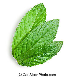 young leaves of mint with clipping path