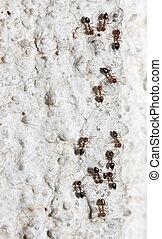 ants on the wall macro