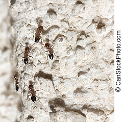 ants on the wall macro