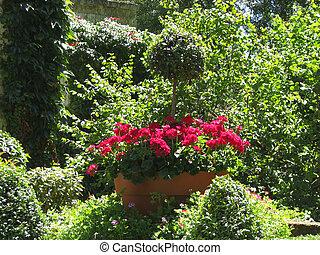 Flowers, Village Brantome