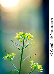 beautiful little yellow flowers in nature