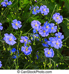 natural forget-me-not blue flower green nature background...
