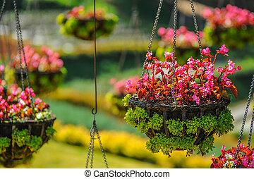 Colorful flower on basket. - Colorful flower on basket hang...