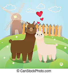 alpacas couple - couple of alpaca in the little farm
