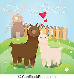 alpaca's, pareja