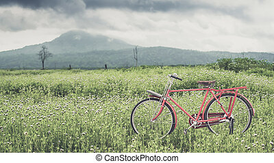 red bicycle - red vintage bicycle on the flower green filed