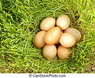 Chicken eggs between green wheat - Pile of chicken eggs...