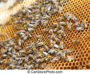 Groupwork - Little bees working in the beehive