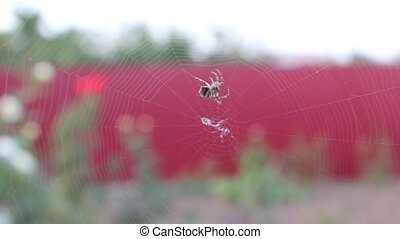 spider weaves a web