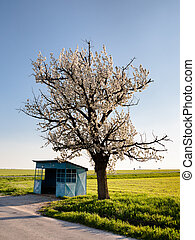 Desolate bus stop - Agricultural country with a bus stop and...