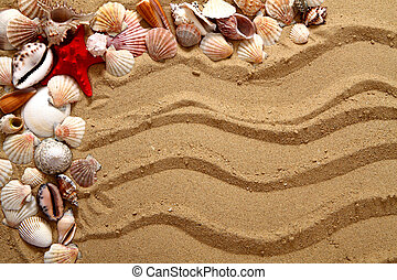 sea shells in the sand