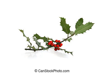 Holly sprig isolated against white background