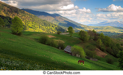 Landscape with a horse in the Carpathian mountains - Spring...