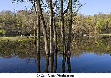 Lake Rebecca Floodplain and Forest - Lake Rebecca Park...