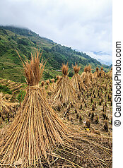 Landscape with hay stacks drying on rice fields in China