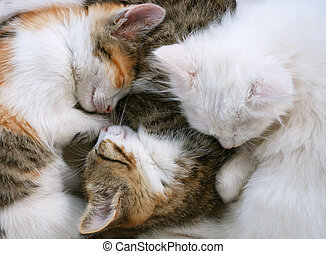 Sleepy cats - three adorable kittens are sleeping together...