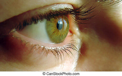 eye - a close-up of a human eye, green color