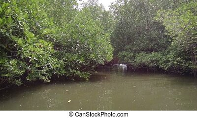 Sail through the mangroves - We float down the river through...