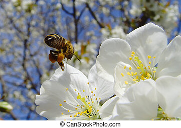 busy bee - a close up of a bee choosing a flower